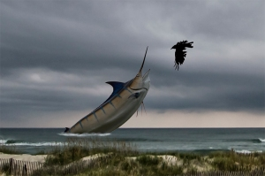 high-time-in-hatteras-w-crow